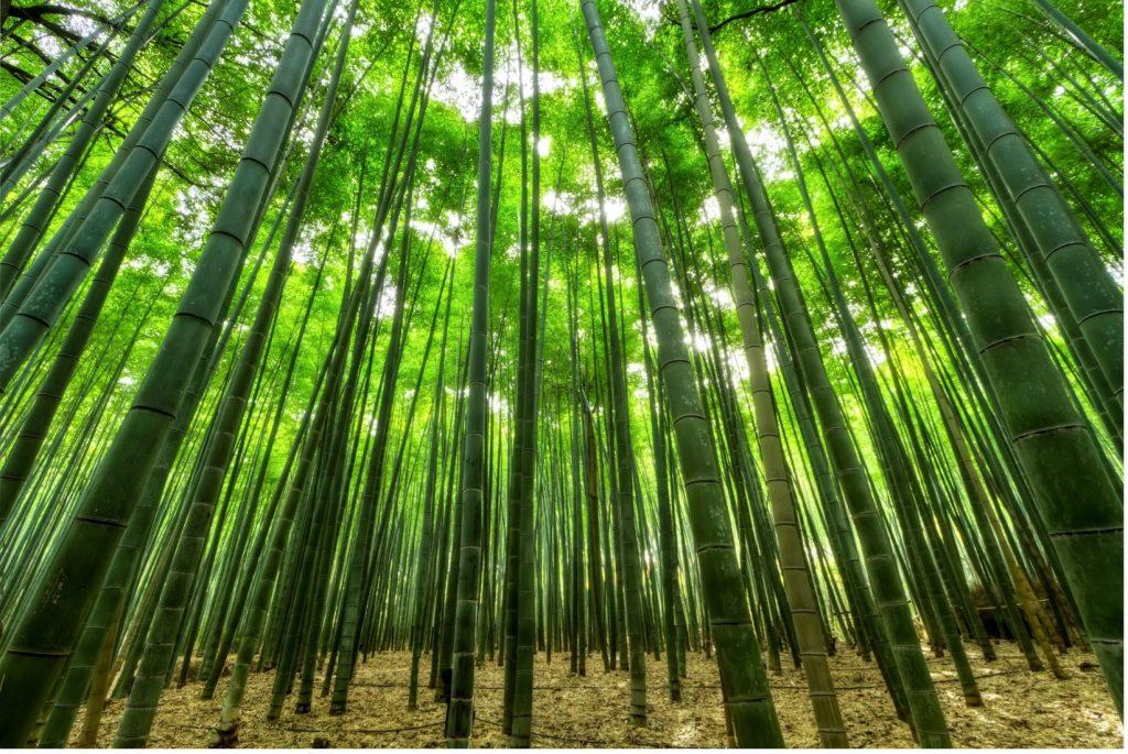Un árbol con hojas verdes  Descripción generada automáticamente con confianza media